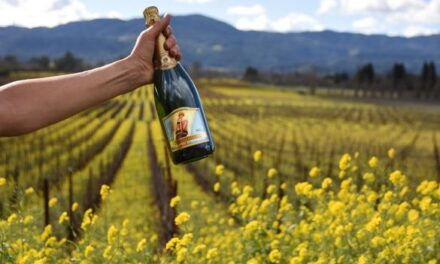 What's New in Sonoma County April 2021